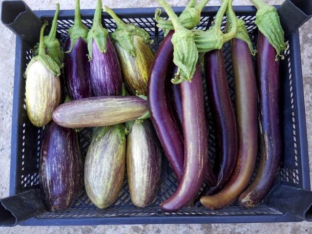 balkonunuzda-yetiştirebileceginiz-10-sebze-meyve