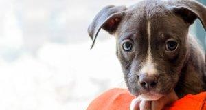 Evcil Hayvanlar İçin Deprem Çantasında Bulundurmanız Gerekenler